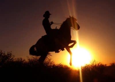 sunsethorse1